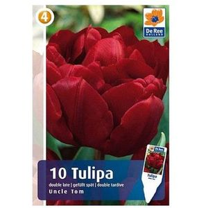 Tulipany Uncle Tom (8711148318156)